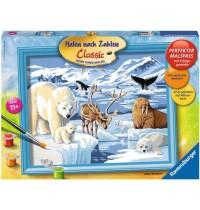 Ravensburger Spiel - Malen nach Zahlen Classic - Tiere der Arktis