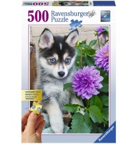 Ravensburger Puzzle - Putziger Husky, 500 Teile