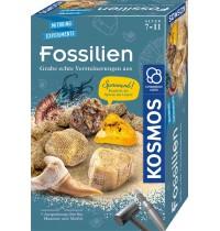 KOSMOS - Fossilien