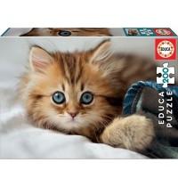 Educa - Kitten 200 Teile